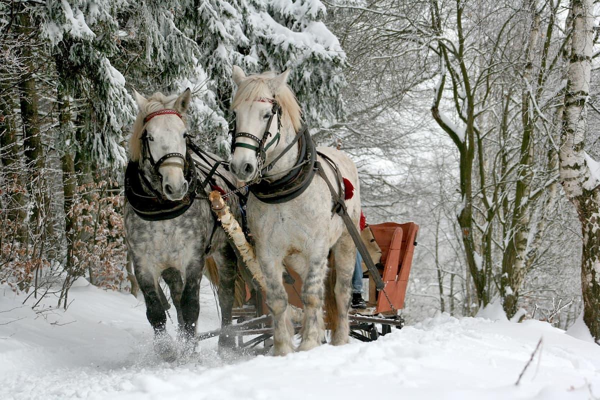 trentino in inverno sulla neve
