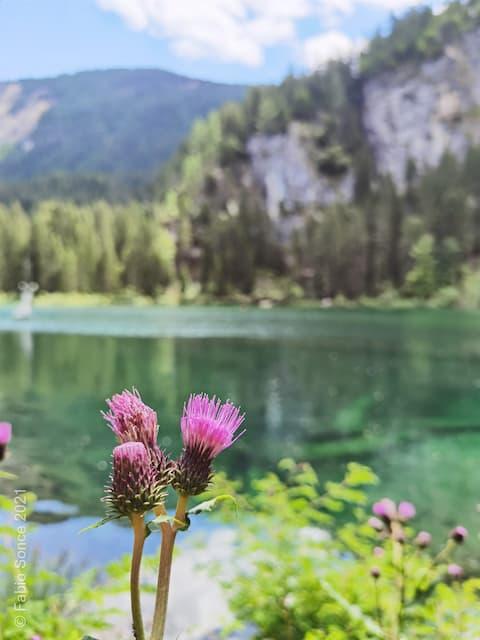fiori lago