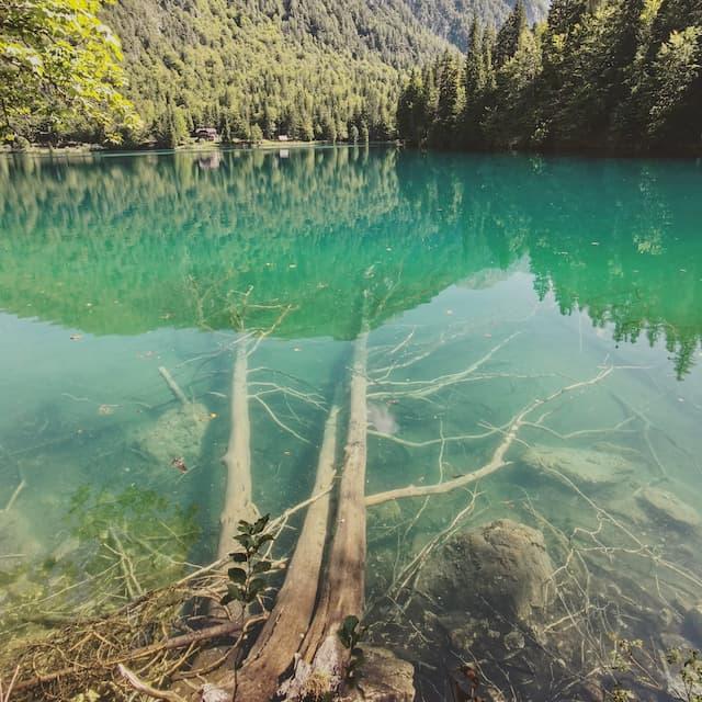 laghi di fusine tronchi sommersi
