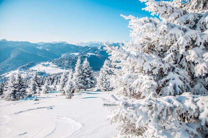 neve trentino settimana bianca